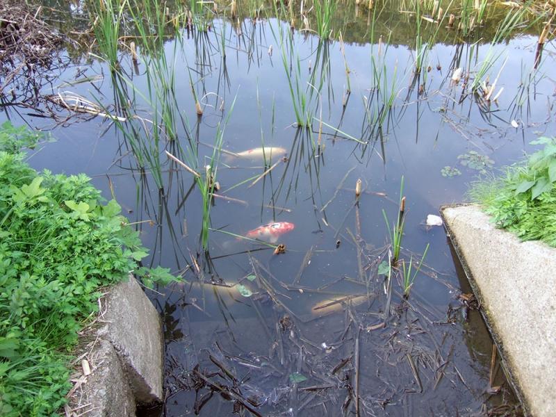 そばに鯉が泳ぐ池があります